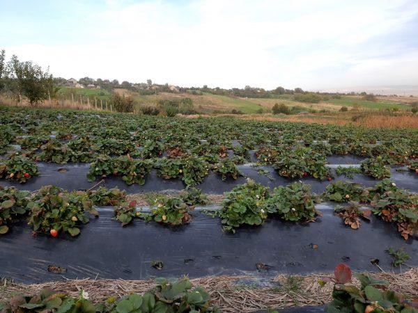 Fructe din Poiana