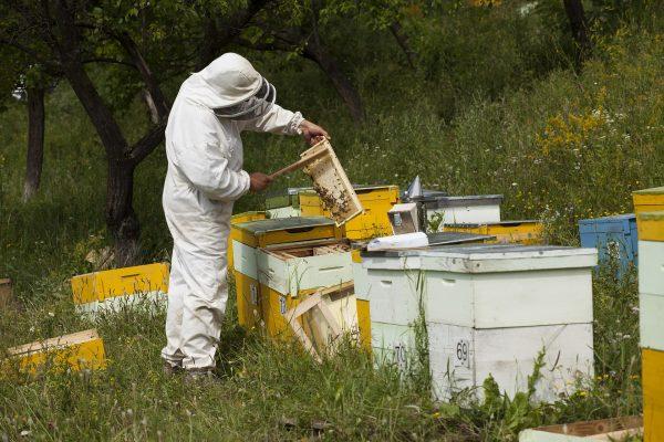 stupi apicultura Taina Vie